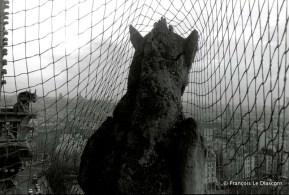 Ref Paris 1 – Gargoyle behind a net, Notre Dame Cathedral