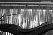 Ref MAGIC 15 – Snake smiling, Madrid Zoo, Spain