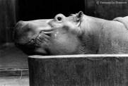 Ref MAGIC 2 – A smiling Hippopotamus, Paris Zoo, France