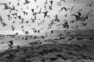 Ref MAGIC 21 – A whole flock of seagulls flying above the sea, Key West, Florida, USA