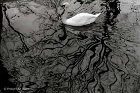 Ref MAGIC 9 – Swan, Vincennes Zoo, Paris