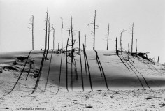 Ref TREES 17 – Dunes National Monument at Florence, Oregon, USA
