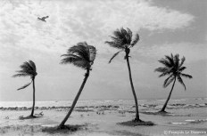 Ref TREES 2 – Palm trees, Key West, Florida, USA