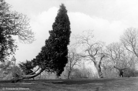 Ref TREES 20 – Bending tree, Buttes Chaumont garden, Paris