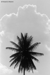 Ref TREES 22 – Palm tree and cloud, India