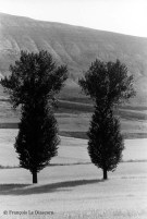 Ref TREES 5 – Poplars. Rioja, Spain