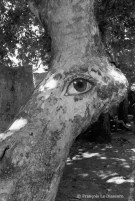 Ref TREES 6 – The eye of the tree, Greece