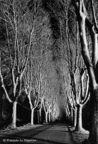 Ref TREES 8 – Street of plane trees, Malaussene village, France.