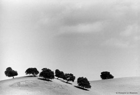 Ref TREES 9 – Cork Oaks on a hill. Estremadure, Spain