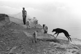 Ref GREEK ISLANDS 11 – Goat-herder, Olympos village, island of Karpathos