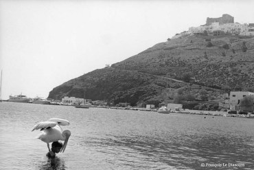 Ref GREEK ISLANDS 14 – Boy swimming with pelican, Astypalea Island