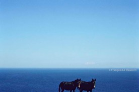 REF BLUE GREECE 17 – 2 donkeys, Folegandros island