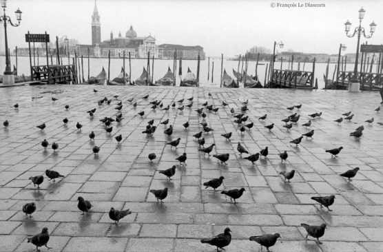 Ref VENICE 29 – St. Mark's Square with pigeons