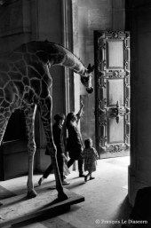 Ref Zoo 2 – Giraffe and children going out of the Grand Gallery