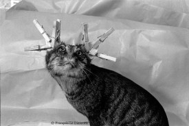 Ref Zoo 24 – Stuffed cat with clothespins on its ears