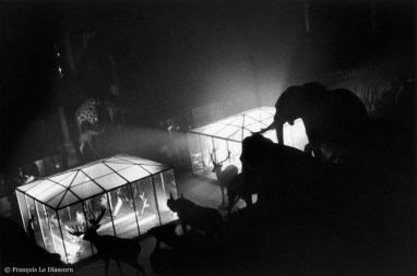 Ref Zoo 6 – Elephants, rhinoceroses and deer in front of lighted cages