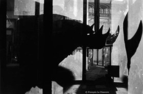 Ref Zoo 9 - Rhinoceros and its shadow in the Gallery