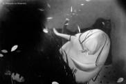 Ref CREATURES 19 – The Dugong, Toba aquarium, Japan